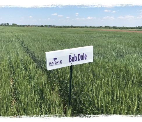 Bob Dole Research Field
